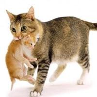 猫の親子に見る生命の大いなる連鎖