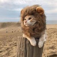 癒し画像:一瞬、ライオンかと思った