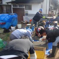 自然菜園スクール/自然稲作・発酵コース4月(種まき、水苗代)