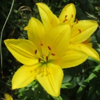 大船フラワーセンター 梅雨時の花々