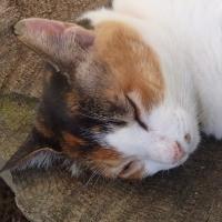 お気に入りの猫の写真