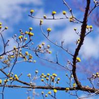 初春の兆しを思わせた武蔵野公園です その1