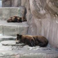 フラワーパークと動物園