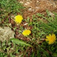 ルチアの春の草花たち
