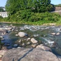 狩野川、天然小型追い活発
