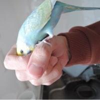 【614】なぜに握った手の中に潜り込む?