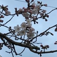春の伊豆高原旅行 その3