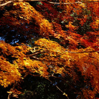 保土ヶ谷公園・紅葉