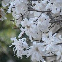 谷中の路地を巡り、桜もついでに