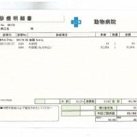 伽羅の肝炎&脳卒中&甲状腺障害日記(25)