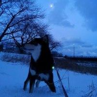 月と雪と犬太くん