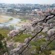 この春、続・日本100名城に選ばれた滝山城址で桜を見る…