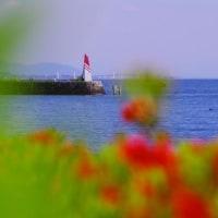 びわ湖畔の春
