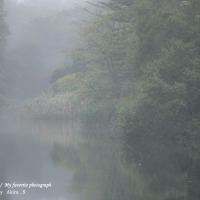 朝霧の雲場池