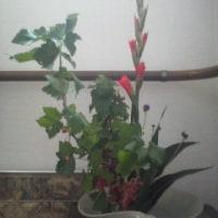 今日のお花