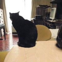 猫って何故可愛いの?