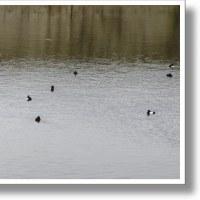 道草ばっか。池の主現る。