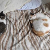 眠る猫3匹
