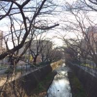 続・小田急散歩♪ 柿生駅(麻生川)コース