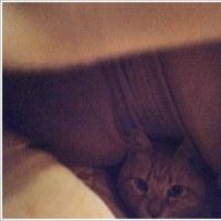 ベッド イン!
