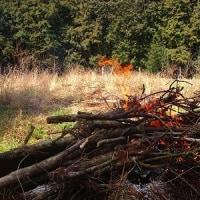 クヌギ救出のための焚火day