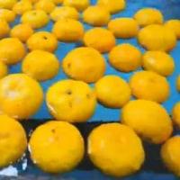 ー柚子茶に含まれる柑橘成分の効用―