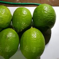 昨日は政策形成実践研集参加。持病の通院。無農薬のレモンを収穫しました。