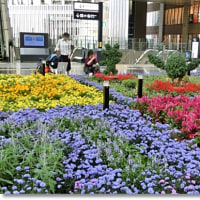 「時空の広場」のお花畑2