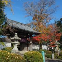 晩秋の龍福寺