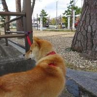 ニュー散歩!!