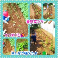 新しい仲間たち~お野菜(^^)v