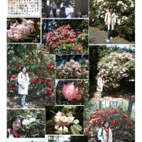 花巡り 「石楠花-1」 鹿沼しゃくなげフラワーパーク