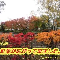 紅葉が広がって来ました・・・