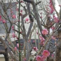 我が家の2月の花