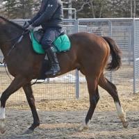 【キングオブハーツ】馬体のシルエットが良くなってきた(^^)