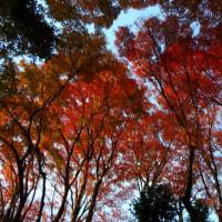 龍尾寺の紅葉。