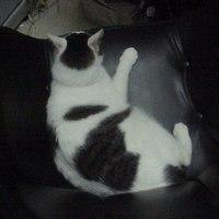 めんまの足付き猫ベッド。