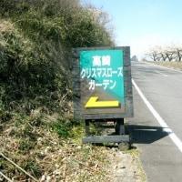 高崎・下里見 クリスマスローズと天神山 H-29- 3-12