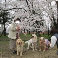 高田公園へお花見・・・前編♪
