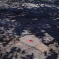 岡崎中央総合グランドは少し紅葉