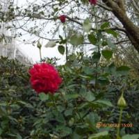 富山総合花センター10/24