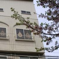 桜のシーズンの新店舗
