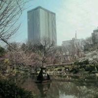 2017   桜 の 頃 の  東 京 日 比 谷 公 園  (2)