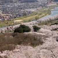 2017年 船岡の桜