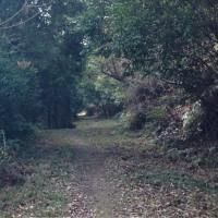 歩いて繋ぐ遍路道-10  義経も通ったと言われる大坂峠は優しい木漏れ日で素敵な道でした