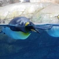 ペンギン何羽いる?