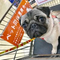 ココさん、初めてのお買い物です。