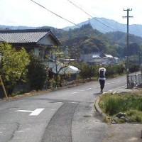 田圃の中の遍路道