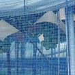 大阪府羽曳野市駒ヶ谷の収穫祭 2 (2017.7.23 (日))