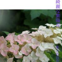 百合の園、季節の花も綺麗です。